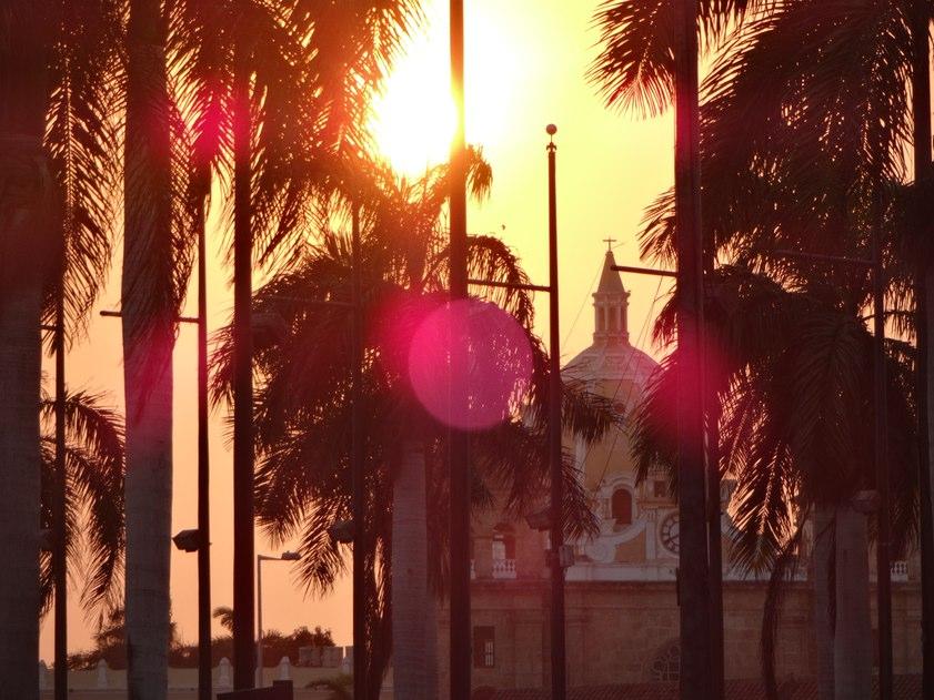 Carthagène-palmier