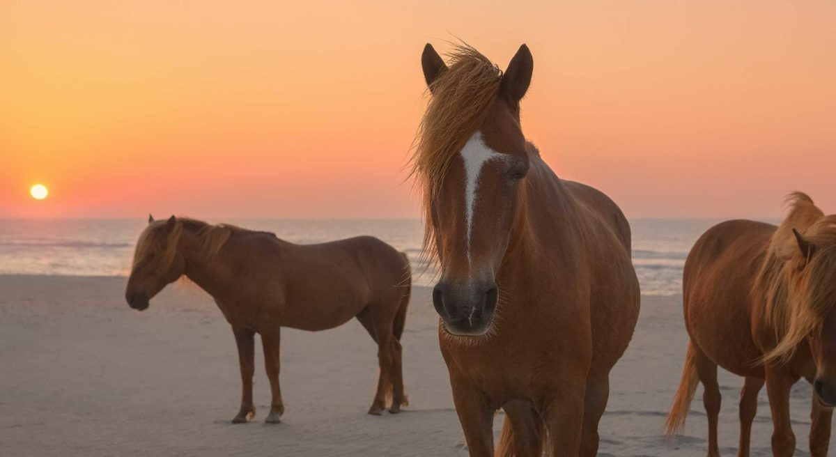 Poney Assateague Island Maryland