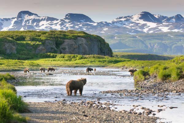 Kodiak Island Bears