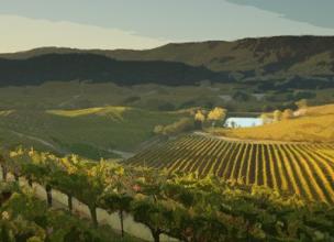 Vignes de Napa - Californie